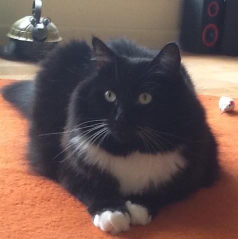 Emma frontal-cat