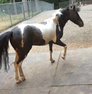 IMG_6469-horse